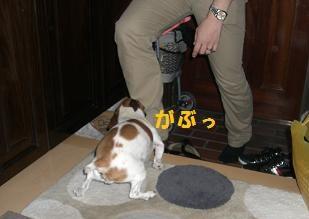 2009_0606_221122-CIMG2505.jpg
