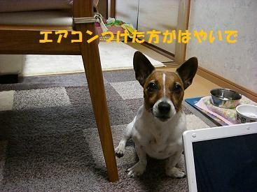2009_0617_102649-CIMG2538.jpg