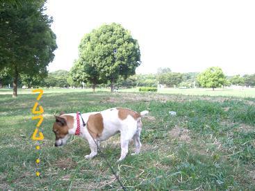 2009_0820_155531-CIMG2733.jpg