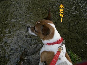 2009_0821_164938-CIMG2763.jpg