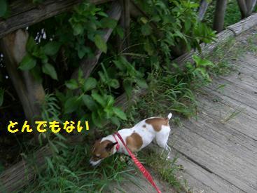 2009_0821_165107-CIMG2768.jpg