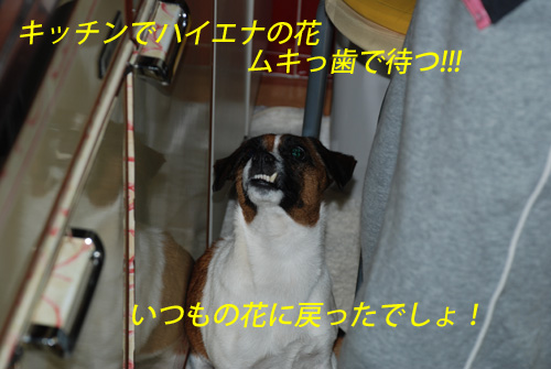 DSC_2678.jpg