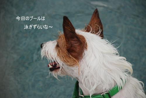 DSC_3911.jpg