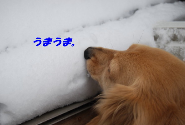 DSC_0033_1000_1.jpg