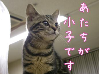 syouko