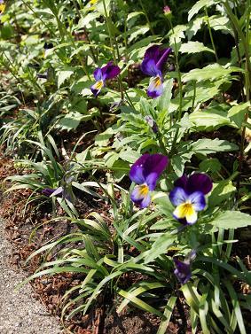 道端に咲く 花