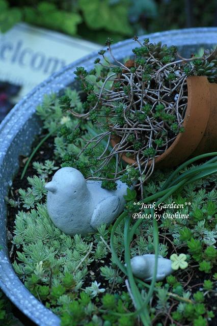 IMG_5636junk garden