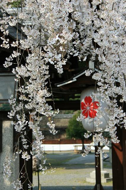IMG_6398平野神社