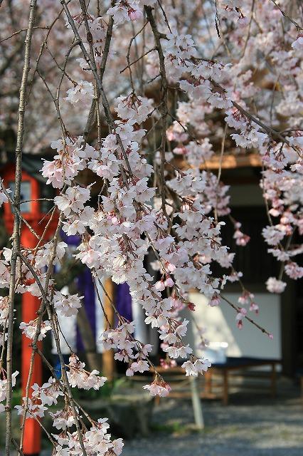 IMG_6390平野神社