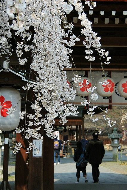 IMG_6402平野神社