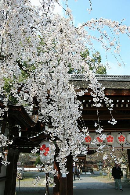 IMG_6408平野神社