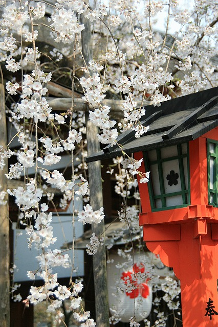 IMG_6414平野神社