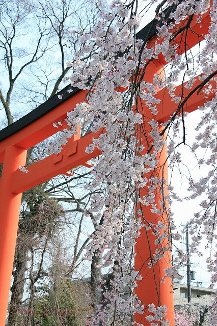 IMG_6432平野神社