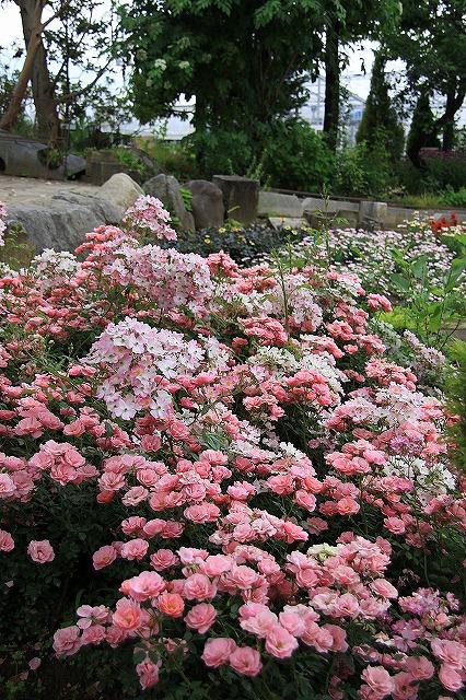 IMG_7975ハーブ庭園