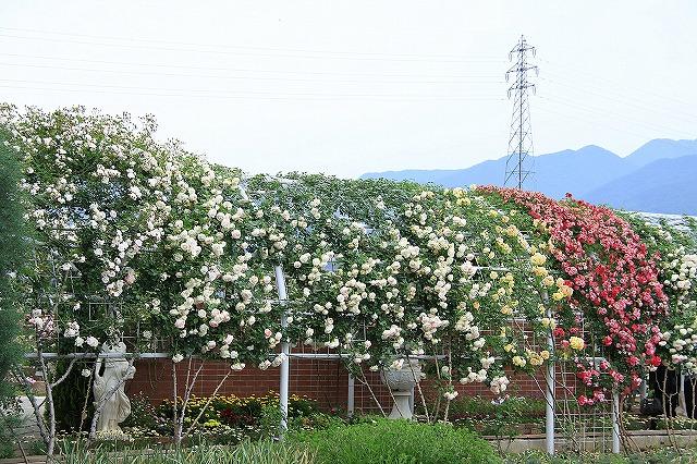 IMG_7978ハーブ庭園