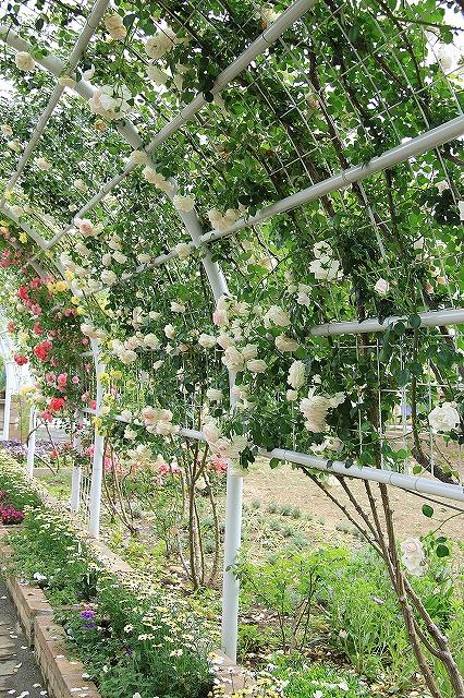 IMG_7981ハーブ庭園