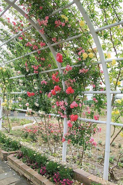 IMG_7986ハーブ庭園