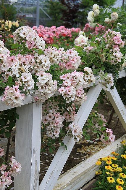 IMG_7995ハーブ庭園