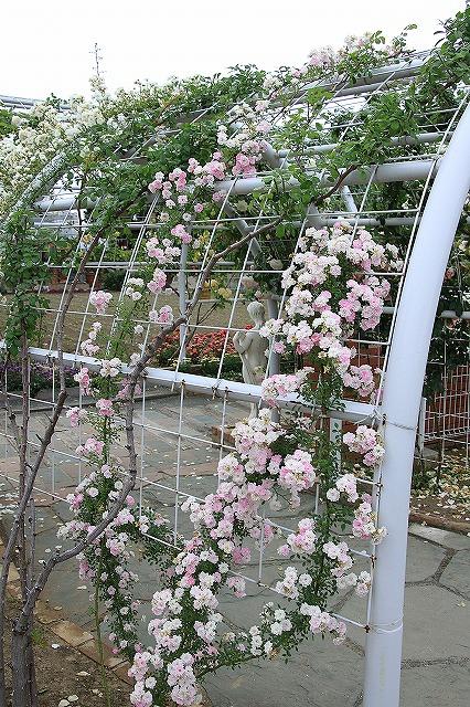 IMG_7998ハーブ庭園