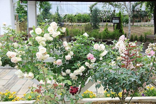 IMG_7999ハーブ庭園