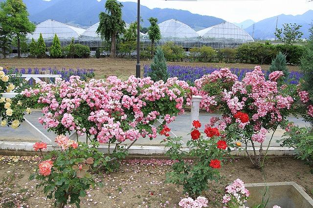 IMG_8000ハーブ庭園