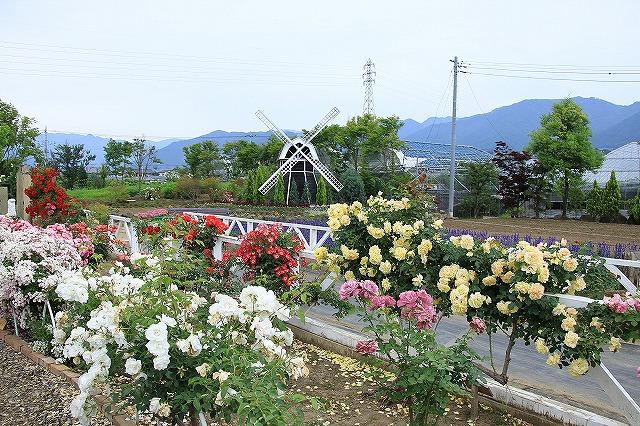 IMG_8001ハーブ庭園