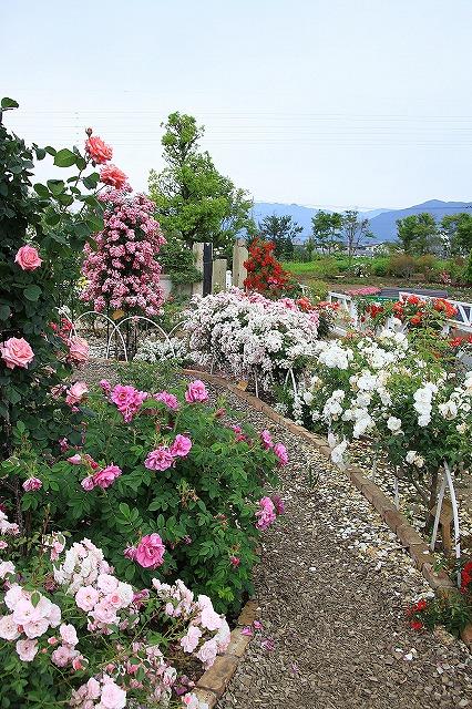 IMG_8004ハーブ庭園