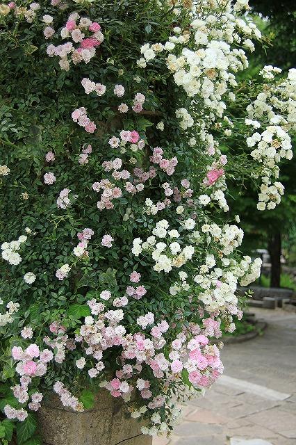 IMG_8080ハーブ庭園