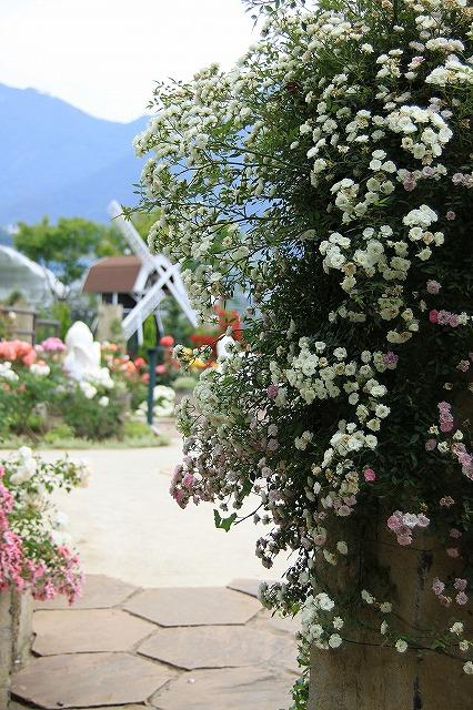 IMG_8081ハーブ庭園