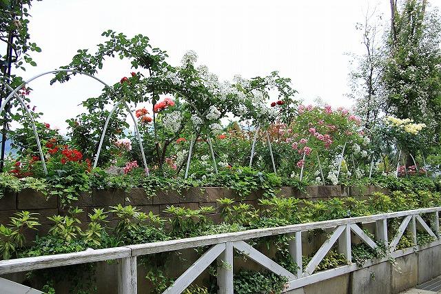 IMG_8084ハーブ庭園