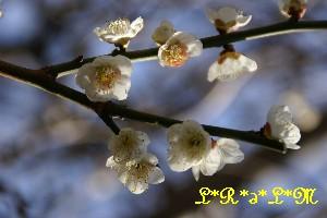 春のあしおと