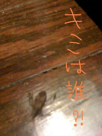 Picture+813_con.jpg