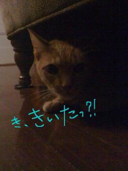 kaminari1_convert_20090824063527.jpg