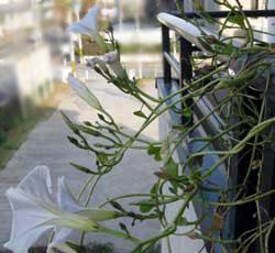 冬に咲く花1123