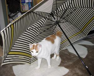 傘と猫0608-2