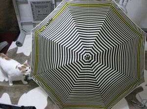 傘と猫0608