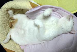 開脚睡眠0717