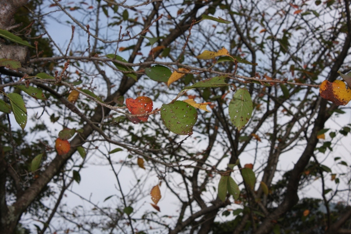 金立公園20081004-03