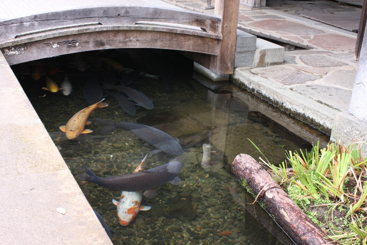 津和野20081030-03