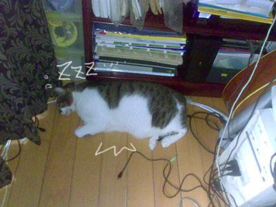 cat sleep