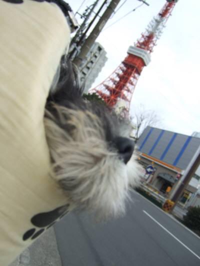 2008_0126shizuku0060.jpg