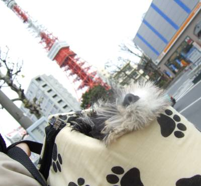 2008_0126shizuku0061.jpg