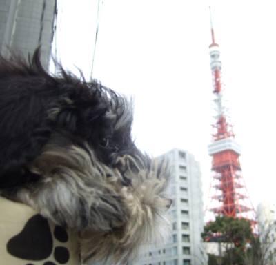 2008_0126shizuku0062.jpg