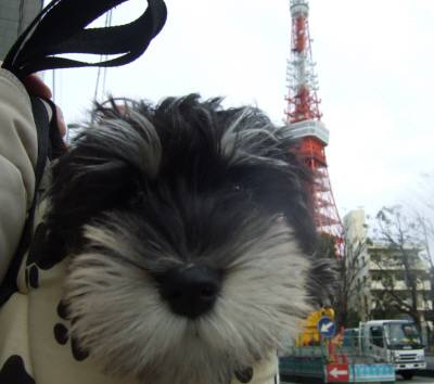 2008_0126shizuku0063.jpg