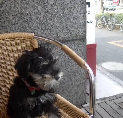 2008_0126shizuku0066.jpg