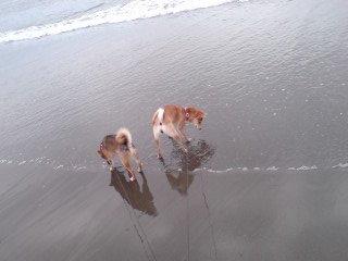 海って楽しいね♪