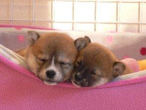 次女&三女ちゃん:あたらちいベッド気持ちいいでしゅ♪