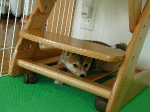 三女ちゃん:プンだ!いいも~~ん!!ここで寝ちゃうからね~だっ(-з-)