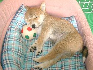 ぷんっだ!寝ちゃうんだからね~だっ!!