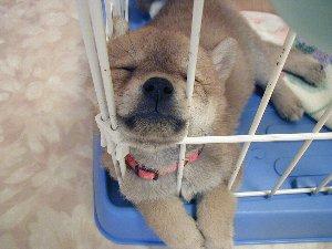 カワユイ寝顔~♪